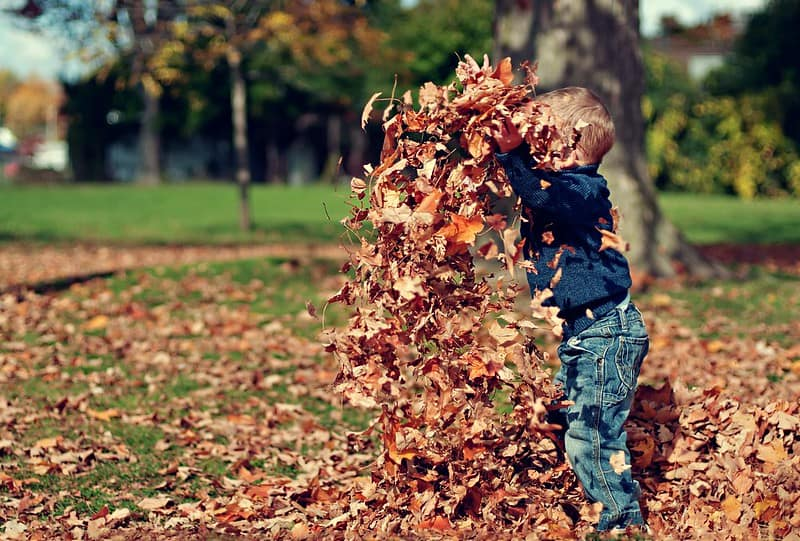 Toddler in the park playing with the autumn leaves.