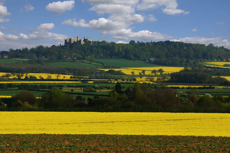 View of Belvoir Castle beyond the rolling yellow fields.