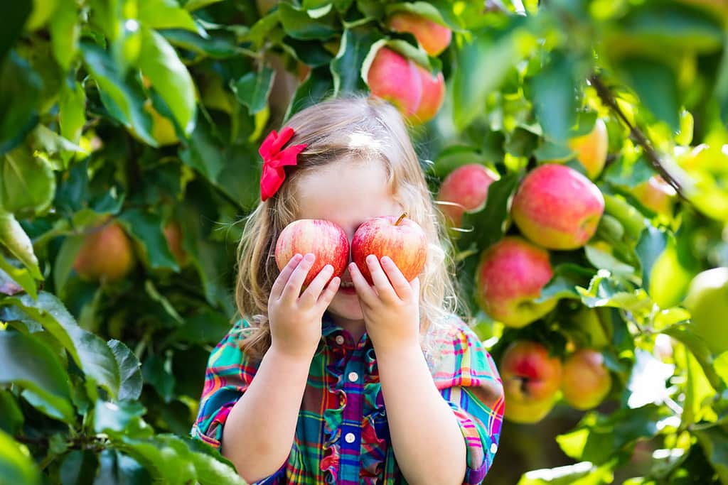 Little girl standing in front o an apple tree holding up two apples to her eyes making a silly face.