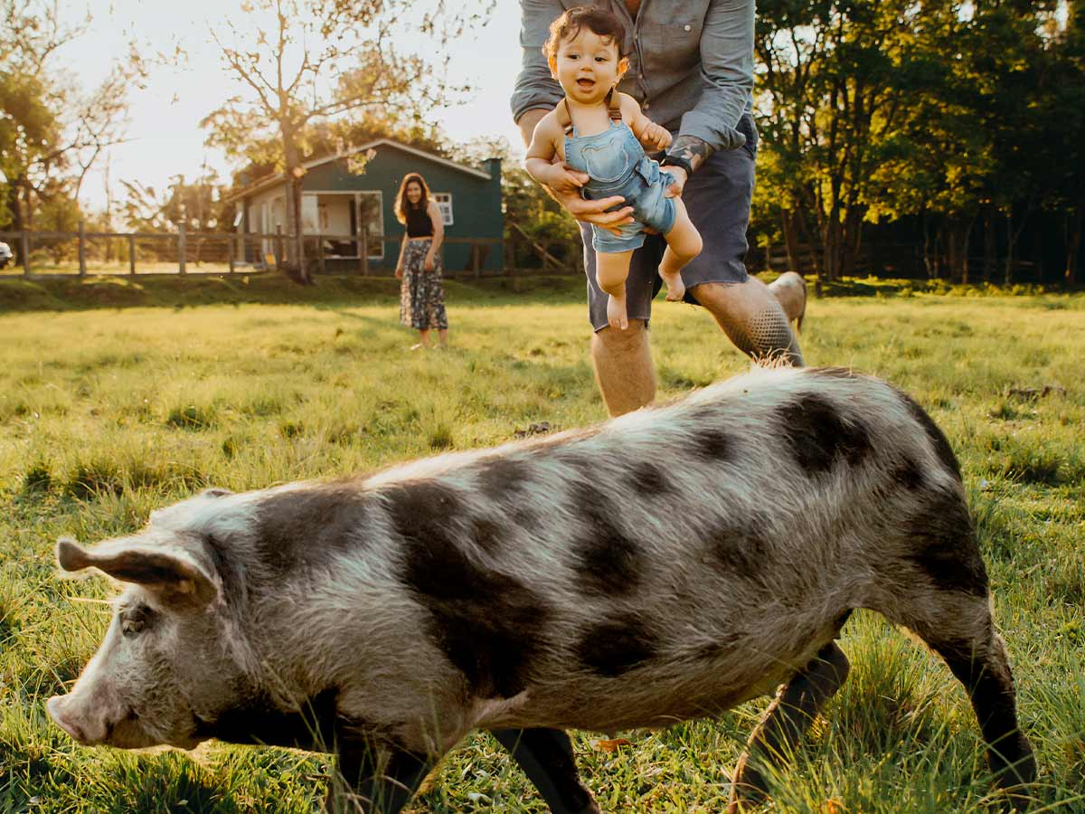Parent carrying their child who is looking at a spotted pig outside.