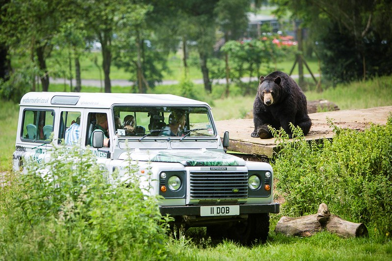 A zookeeper's van taking guests up close to the animals.