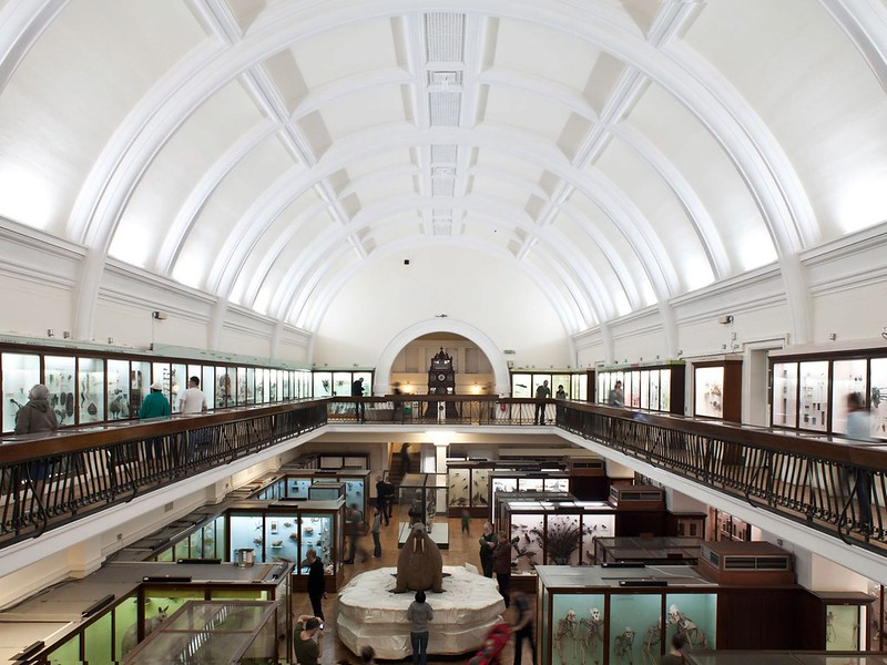 Interior perspective of domed building of Horniman Natural History Gallery.