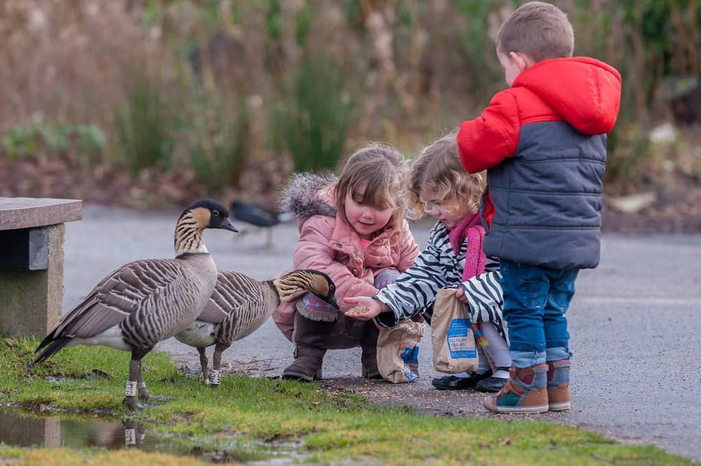Three little children feeding the ducks at the Wetlands.