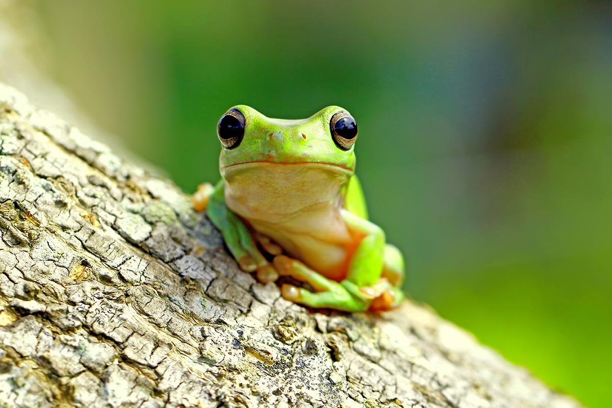 Green frog sat on a tree trunk.