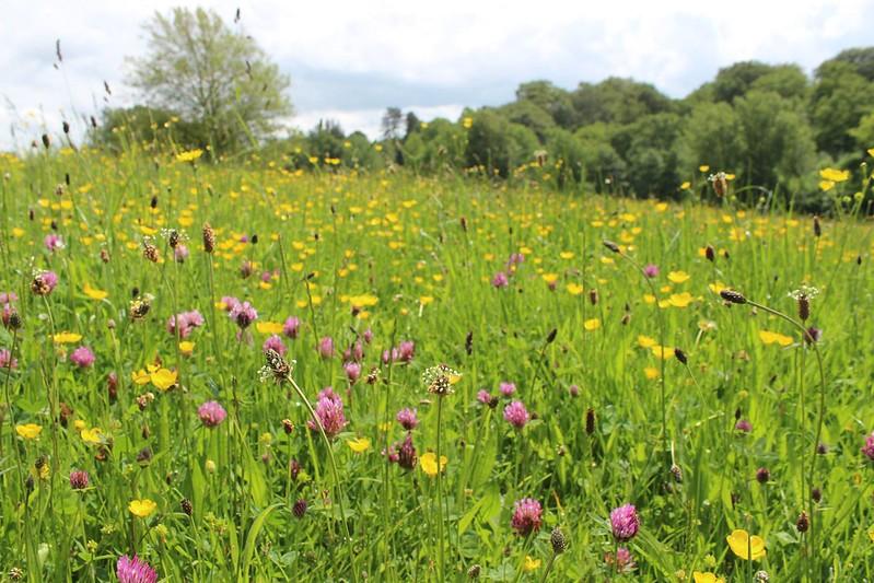 Flowers in field.