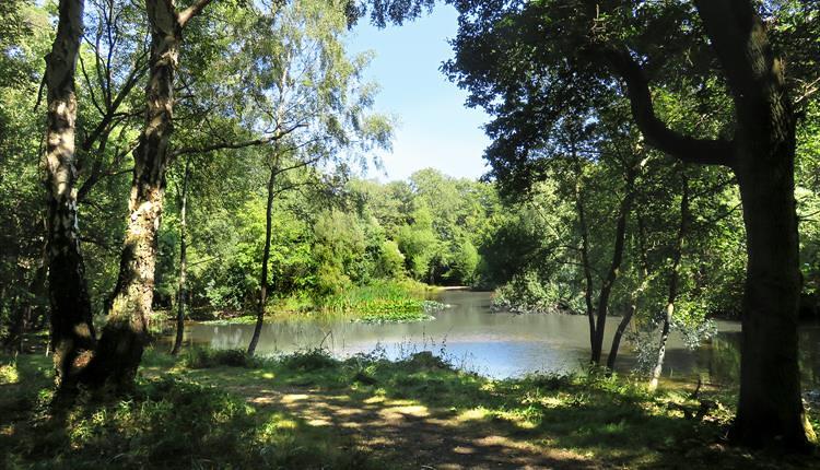 Woods and lake.