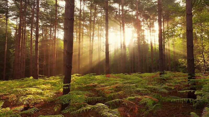 Broxbourne Woods.