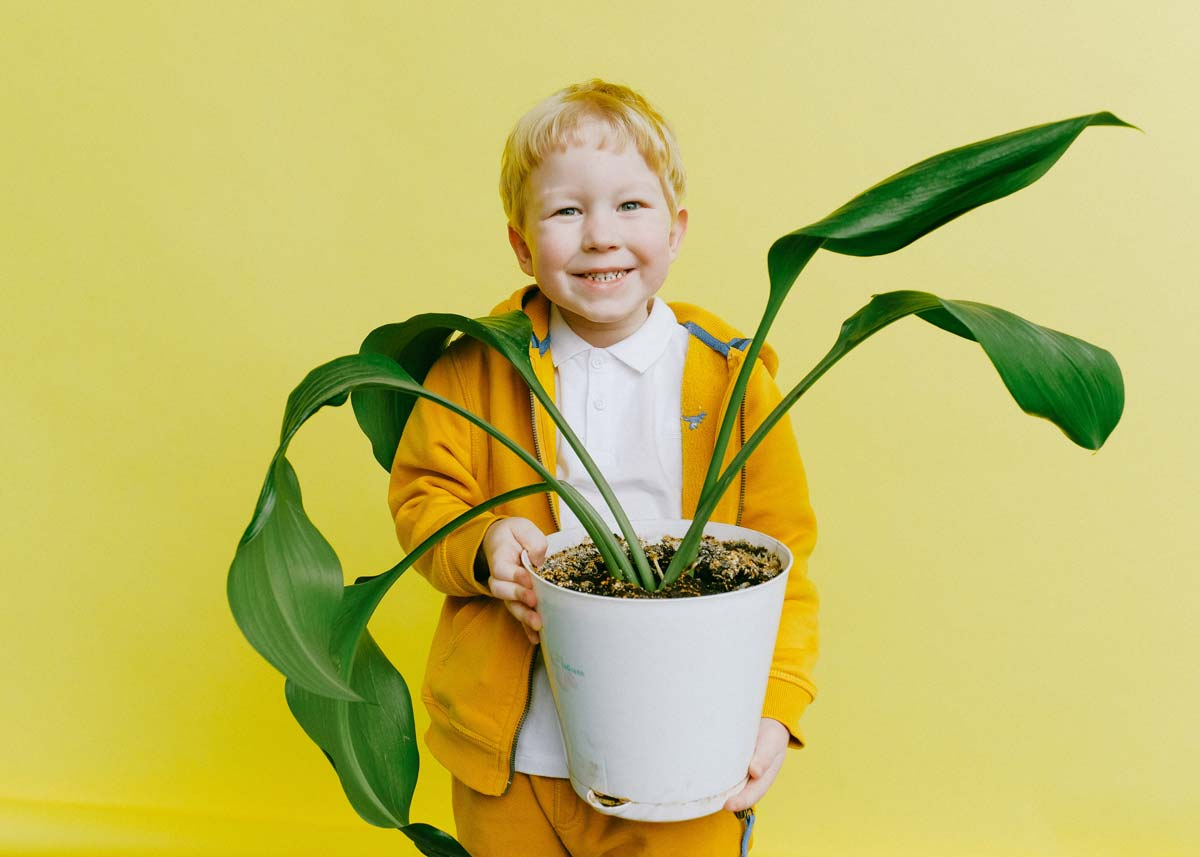 Young boy smiling as he holds up a plant in a pot standing in front of a yellow background.