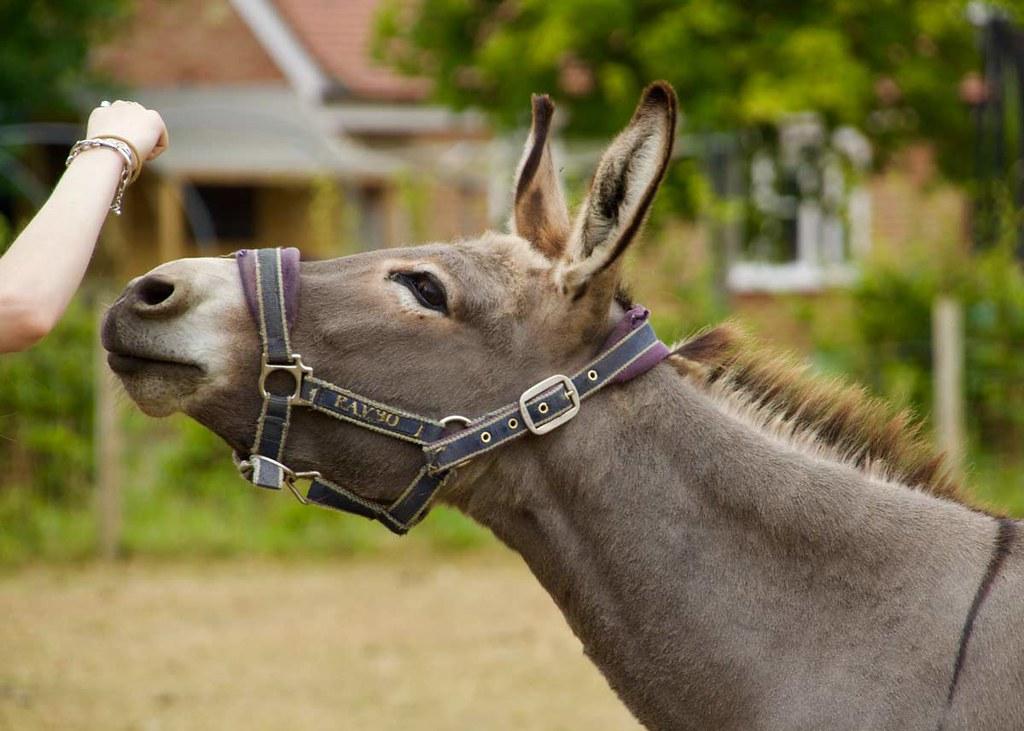 Image of a child's hand feeding a donkey.