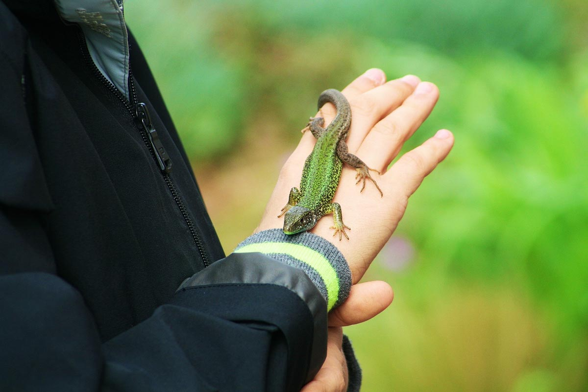 Lizard crawling on a person's hand as they stand in the rainforest.
