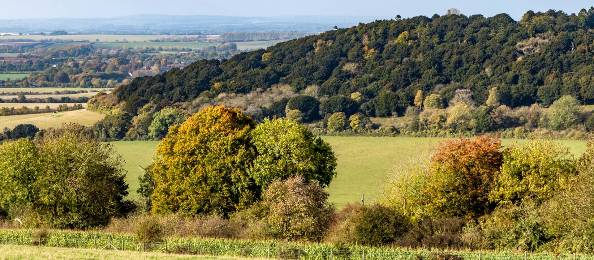 The view of Watlington Hill from Deans Wood.