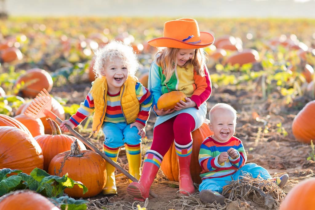 Small kids playing in a field of pumpkins enjoying themselves making pumpkin costumes.