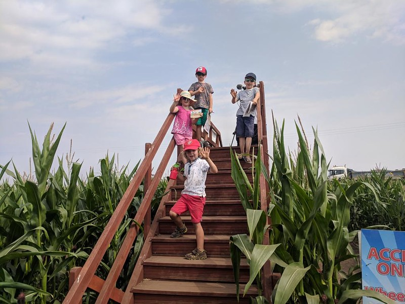 Kids at the top of stairs overlooking Skylark Maze.
