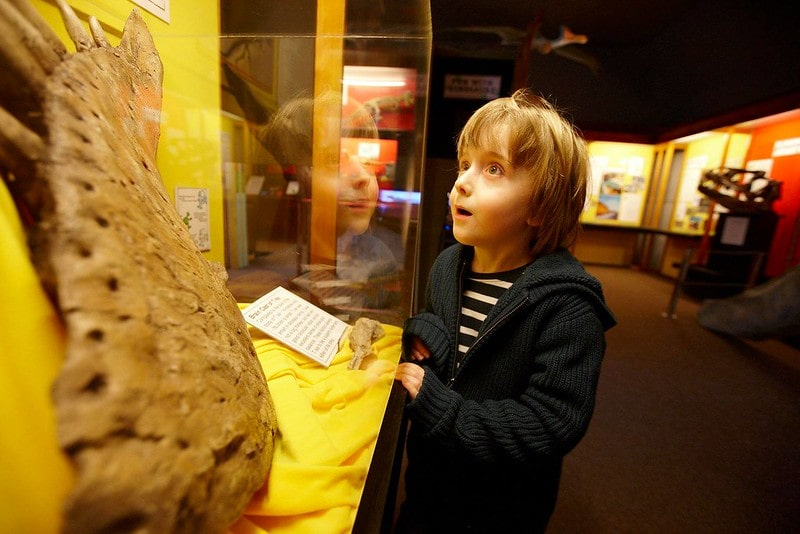 A child looking at an exhibition at The Dinosaur Museum.