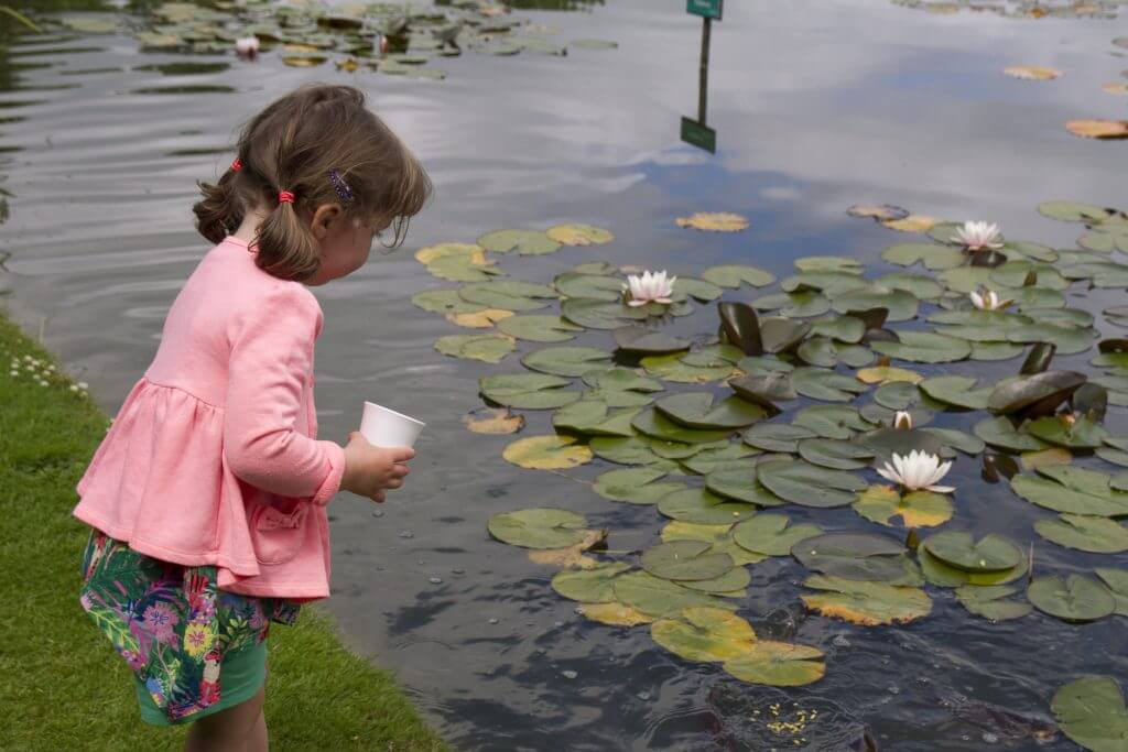 Small child in a pink coat feeding the fish in the ornamental lake at Burnby Hall Gardens and Museum.