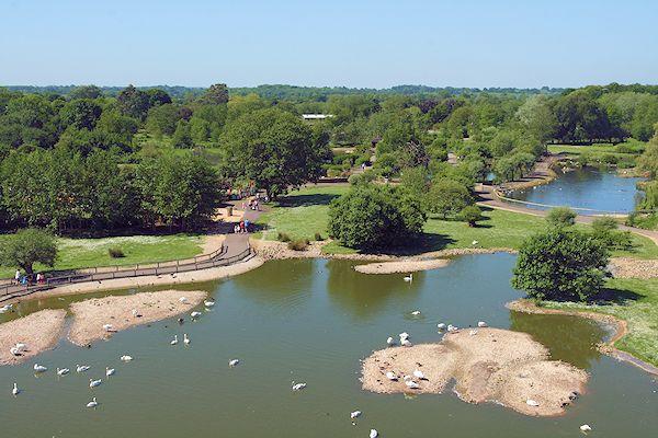 An overview of Slimbridge Wetland Centre.