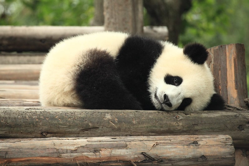 These are fascinating panda names for lovers of sweet and savory treats.