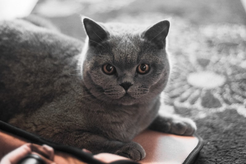 Name your adorable grey cats after a popular cat character or perhaps a pun like Earl Grey.