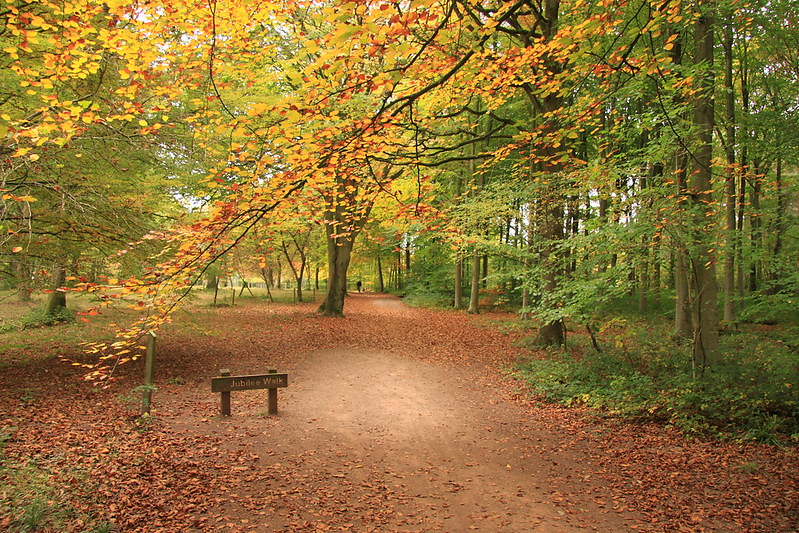 Walking nature trail, trees overlooking path at Queenswood Country Park and Arboretum.