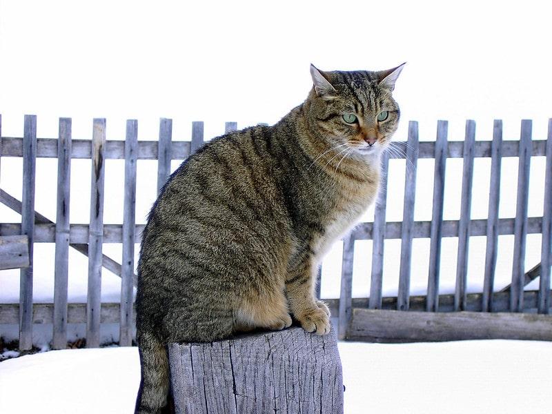 Cat's 'purrfect' photoshoot pose.