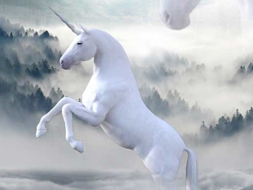 Unicorn names can be both magical and sweet.