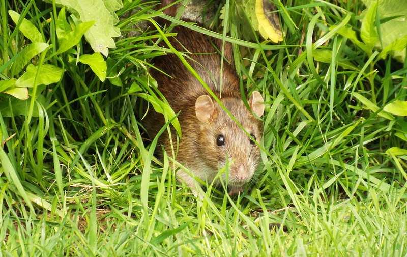 A tiny curiuos cat peeking amidst grasses.