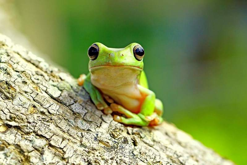 There are so many funny and unique frog names to choose from.