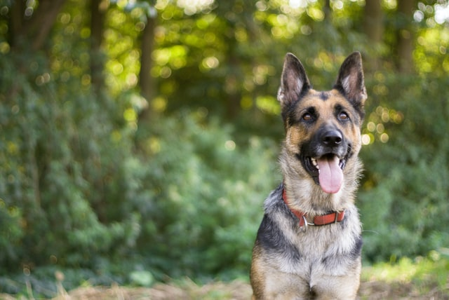 There are many adorable female German dog names which will make your dog stand out.