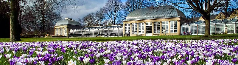 The Glass Pavilions at Sheffield Botanical Gardens with purple flowers in the foreground.