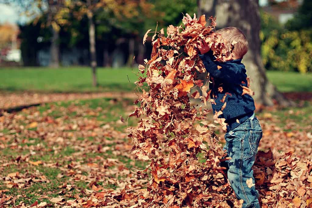 Young kids will love playing with the crunchy autumnal leaves in the parks and outdoor green spaces during half term.