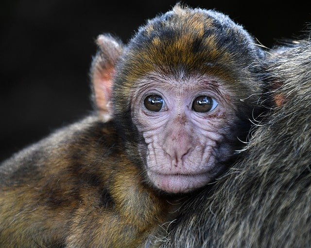 It is common to name your monkey after famous movie characters.
