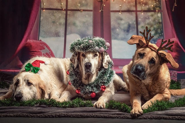 Dogs have the special ability to make you feel Christmassy inside out.