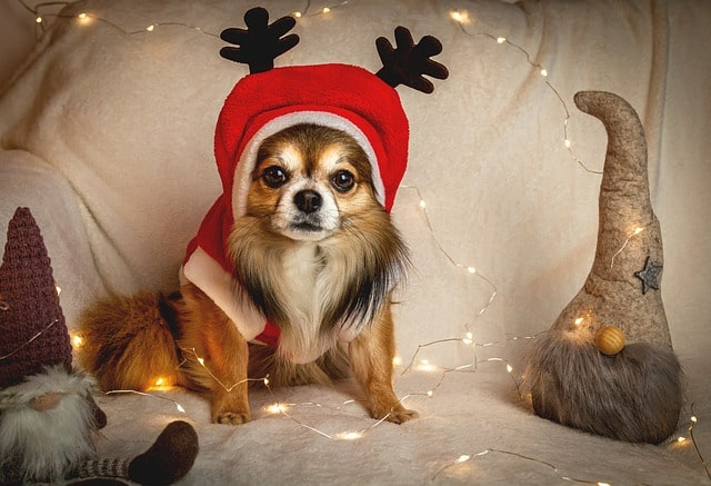 (You can give a hilarious name to your pet dog inspired by the holiday season.