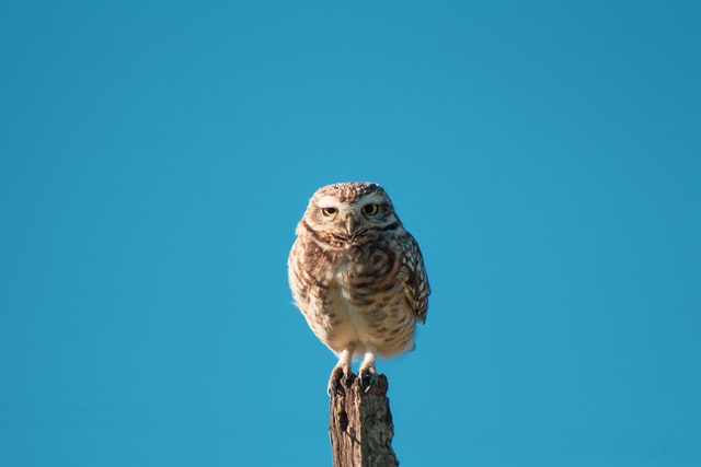 Owl always be here for you.