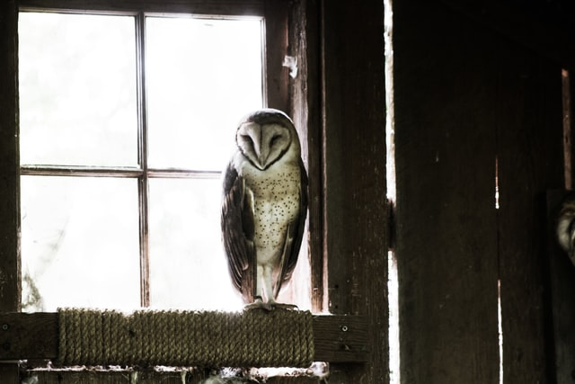 Owls are quite famous and considered wise too.