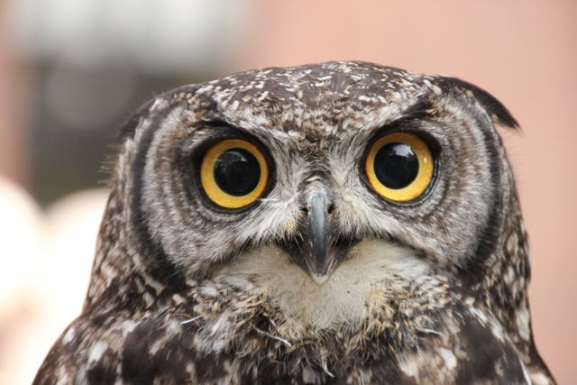 (Owls are great symbolic creatures.