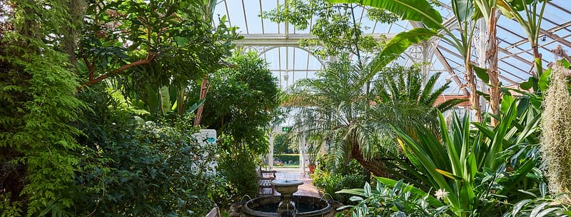 The interior of a glasshouse at Birmingham Botanical Gardens featuring lots of luscious plants.