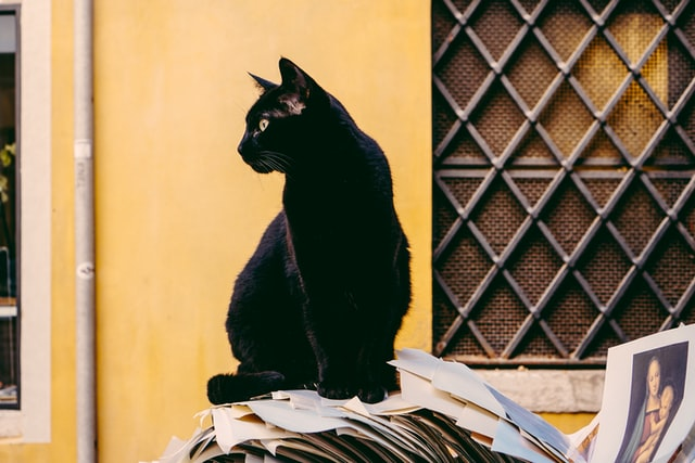 There are a lot of striking names for cats in Italian.
