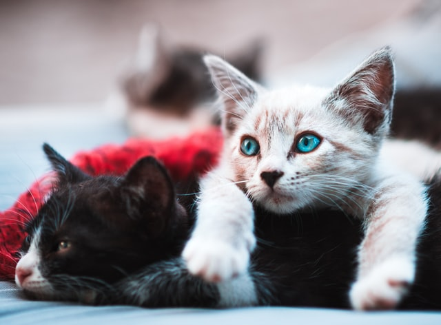 Many unisex names for cats are based on their breed and other feline features.