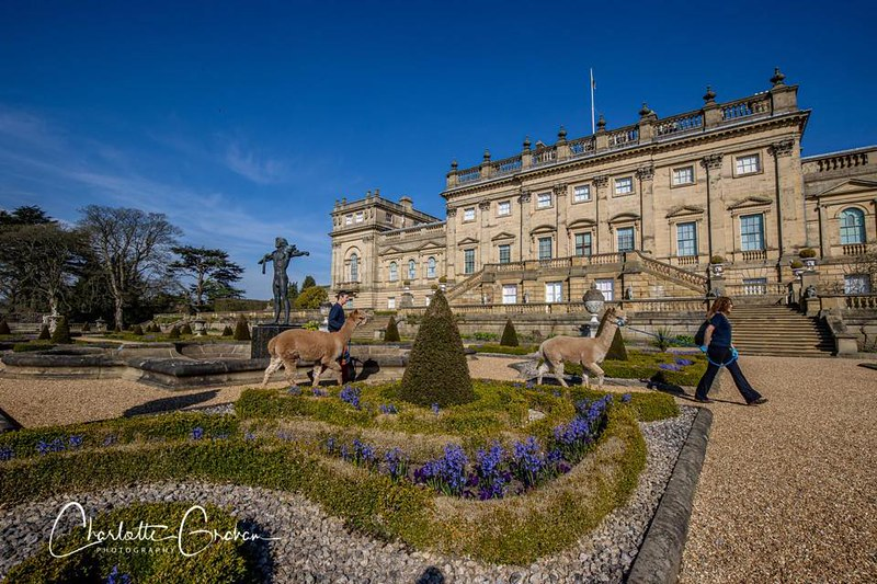 Harewood House exterior on a cloudless day.