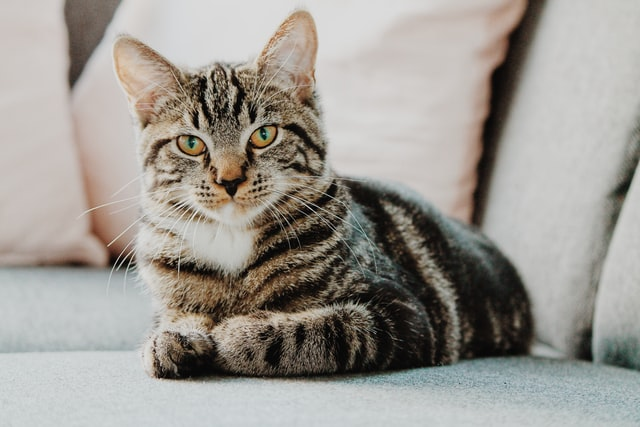 Many great male cat names can be found in movies and TV shows.