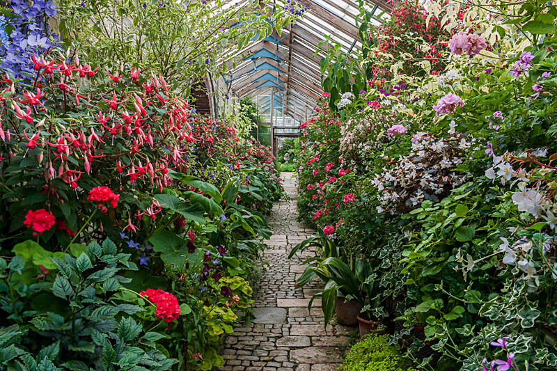 The interior of the colourful flowers in the glasshouse at Parham House & Gardens.