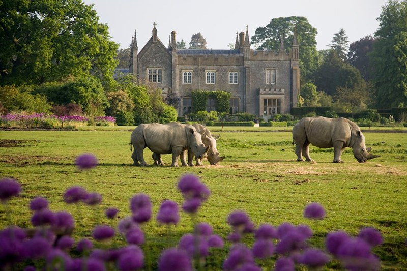 Cotswold Wildlife Park building exterior with rhinos roaming landscape in front.