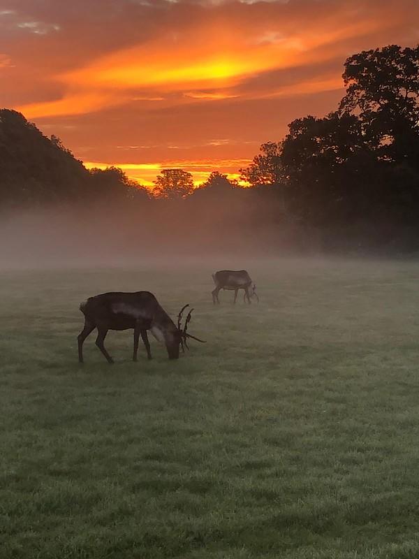 Cotswold Wildlife Park deers on landscape during sunset.