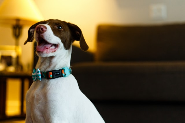 Fun names for goofy dogs can make a great dog name for your new pup.