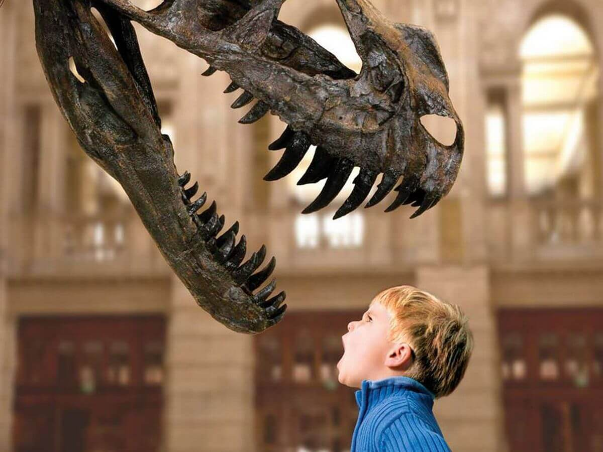 A child roaring in the face of a dinosaur skeleton at Kelvingrove Art Gallery.