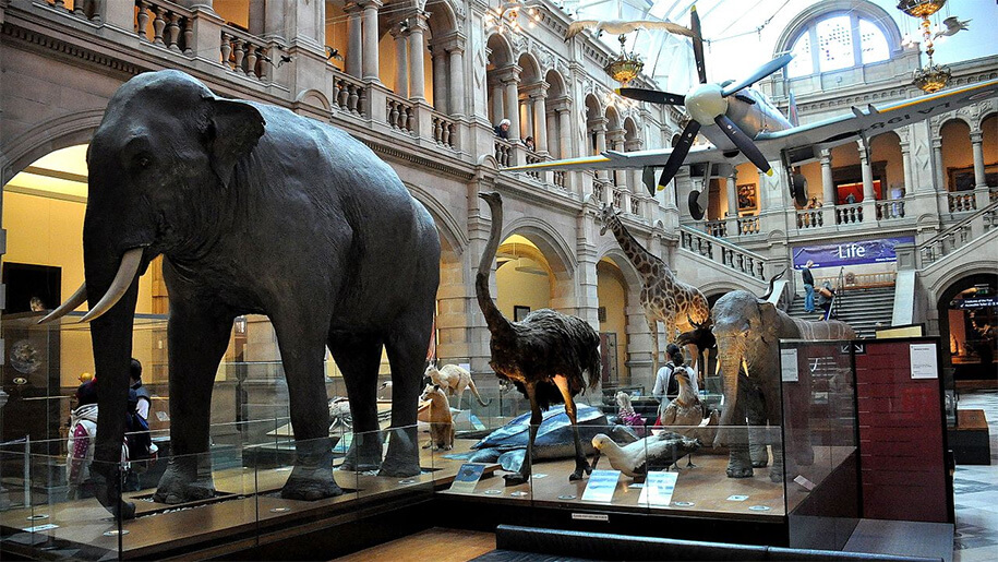 The stuffed elephant and other animals on display at Kelvingrove Art Gallery.