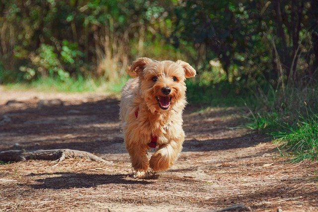 (Spanish dog names can be inspired by many different things.