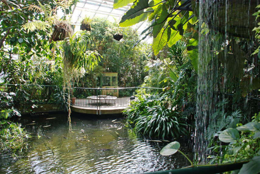 A view of the inside of the hothouse at Plantasia Swansea.