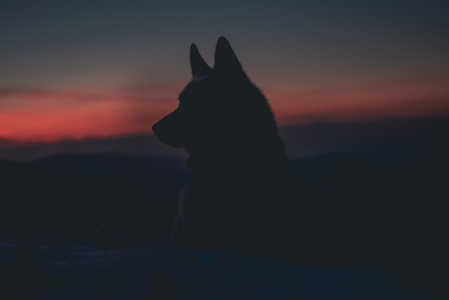A direwolf name should reflect the great terror and awe that these beasts inspire.